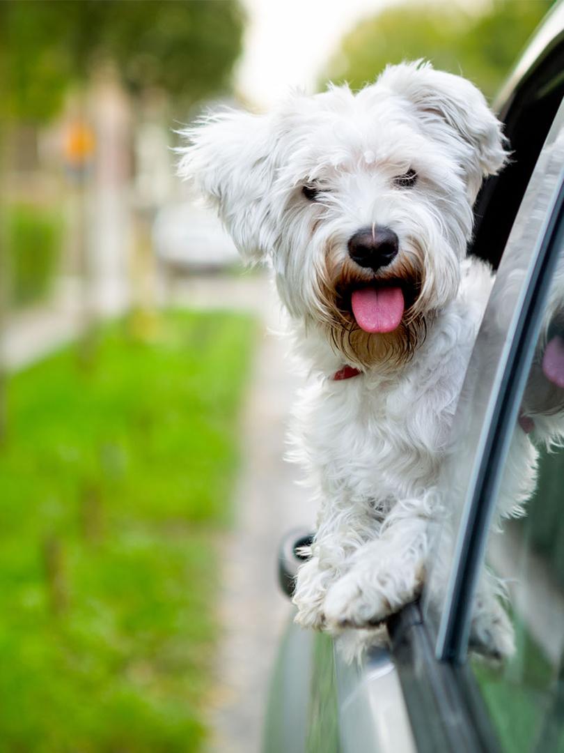 Spokój zwierzęcia to bezpieczeństwo podróżnych