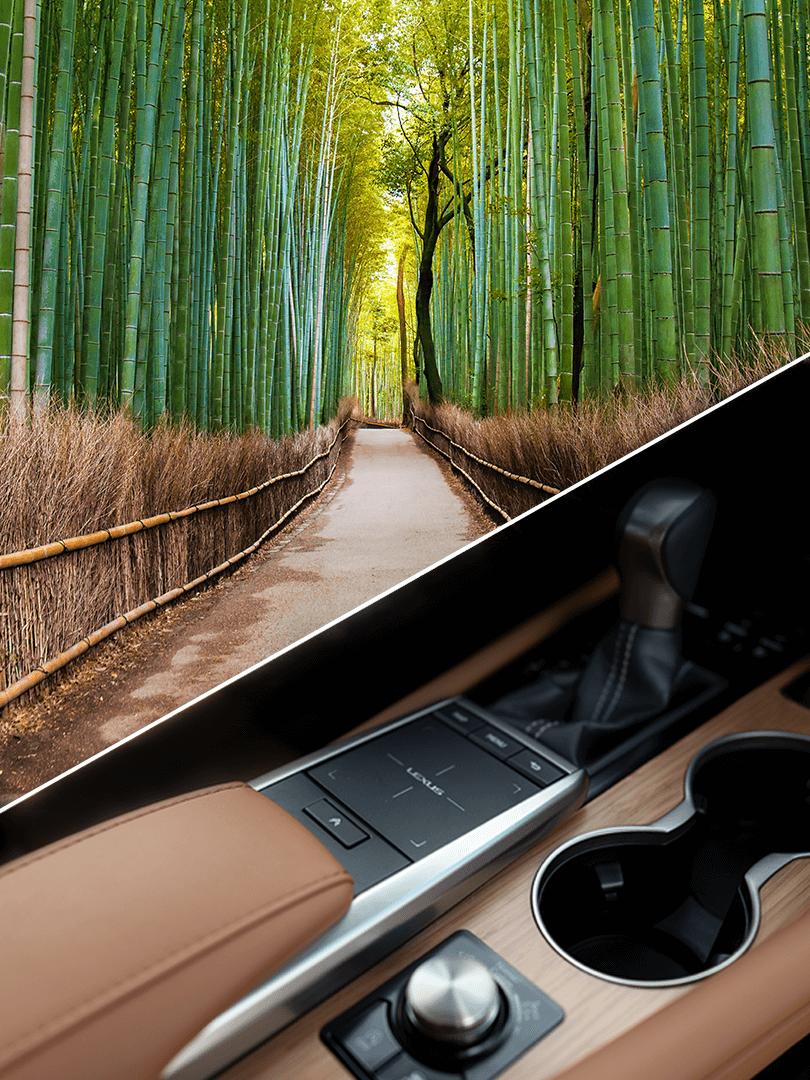 Parallax Image 1 bamboo